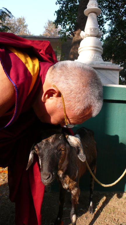 Blessing liberated goats
