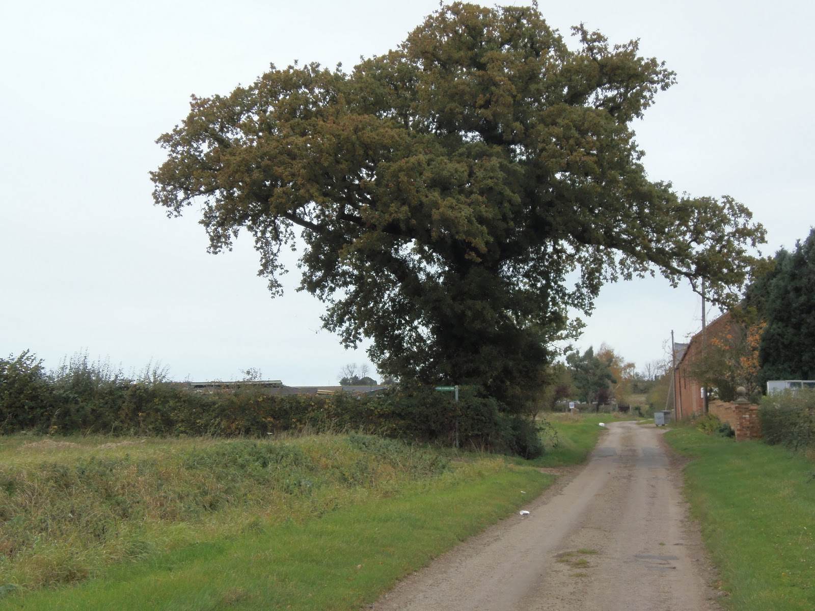 Another Oak