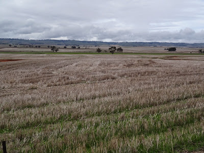 the fields of Tarlee