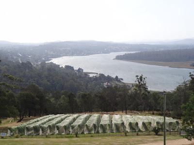 Tamar Valley