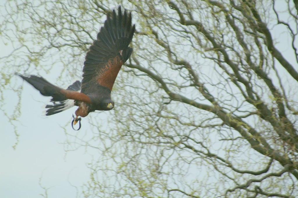 Opening Speeltuin en Roofvogelshow 17 maart 2007 - Nr_155