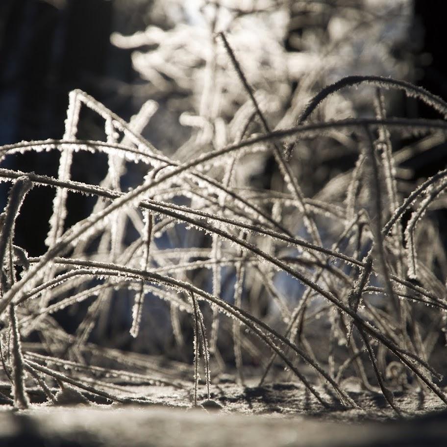 Zimní větvičky 2010 - _DSC9910