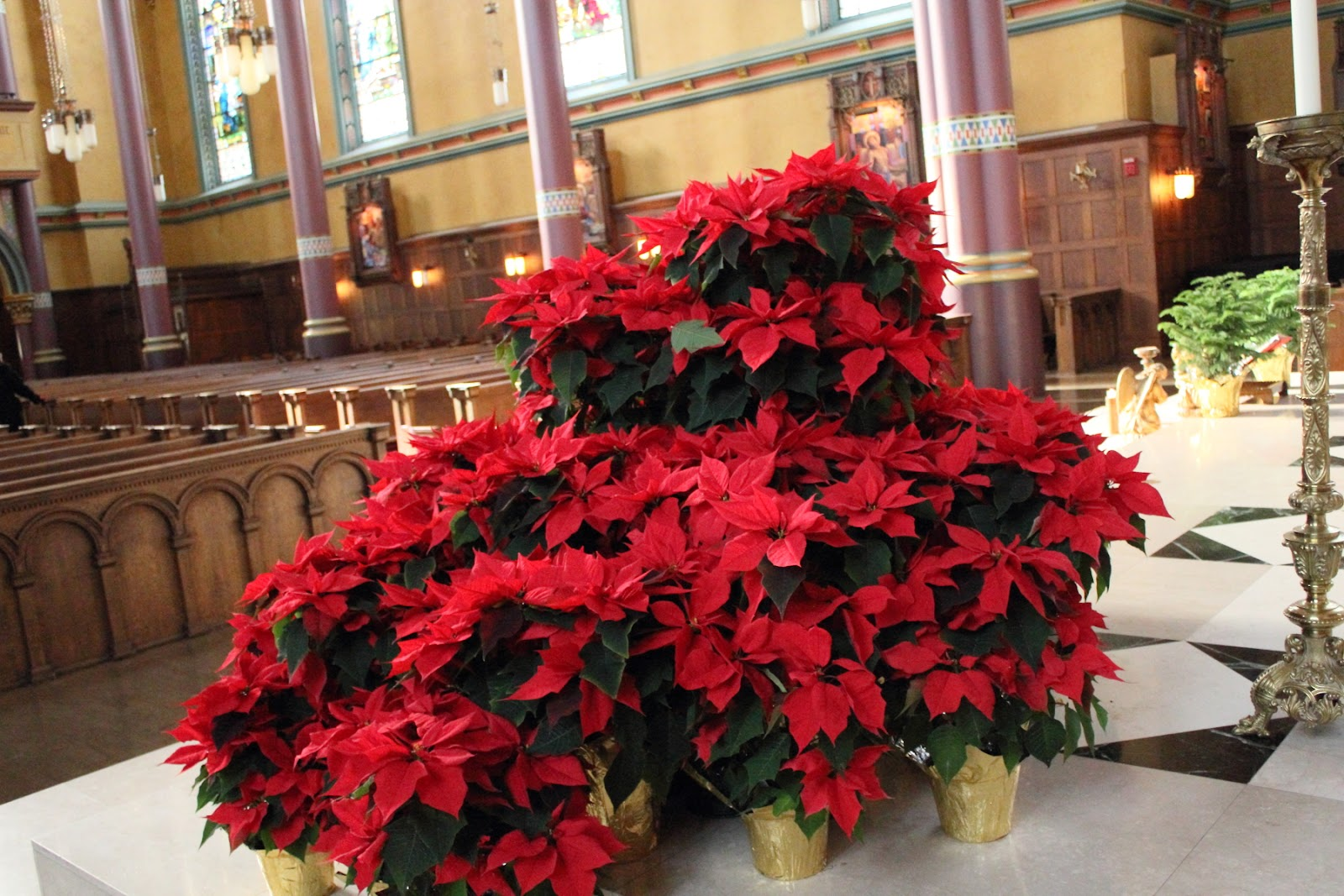 Poinsettia - Cathedral of the Madeleine