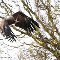 Opening Speeltuin en Roofvogelshow 17 maart 2007 - Nr_105