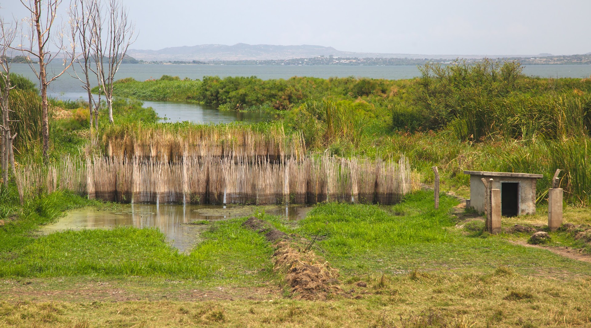 Fishing fence on the Lake Victoria
