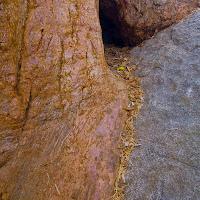 sequoia_5