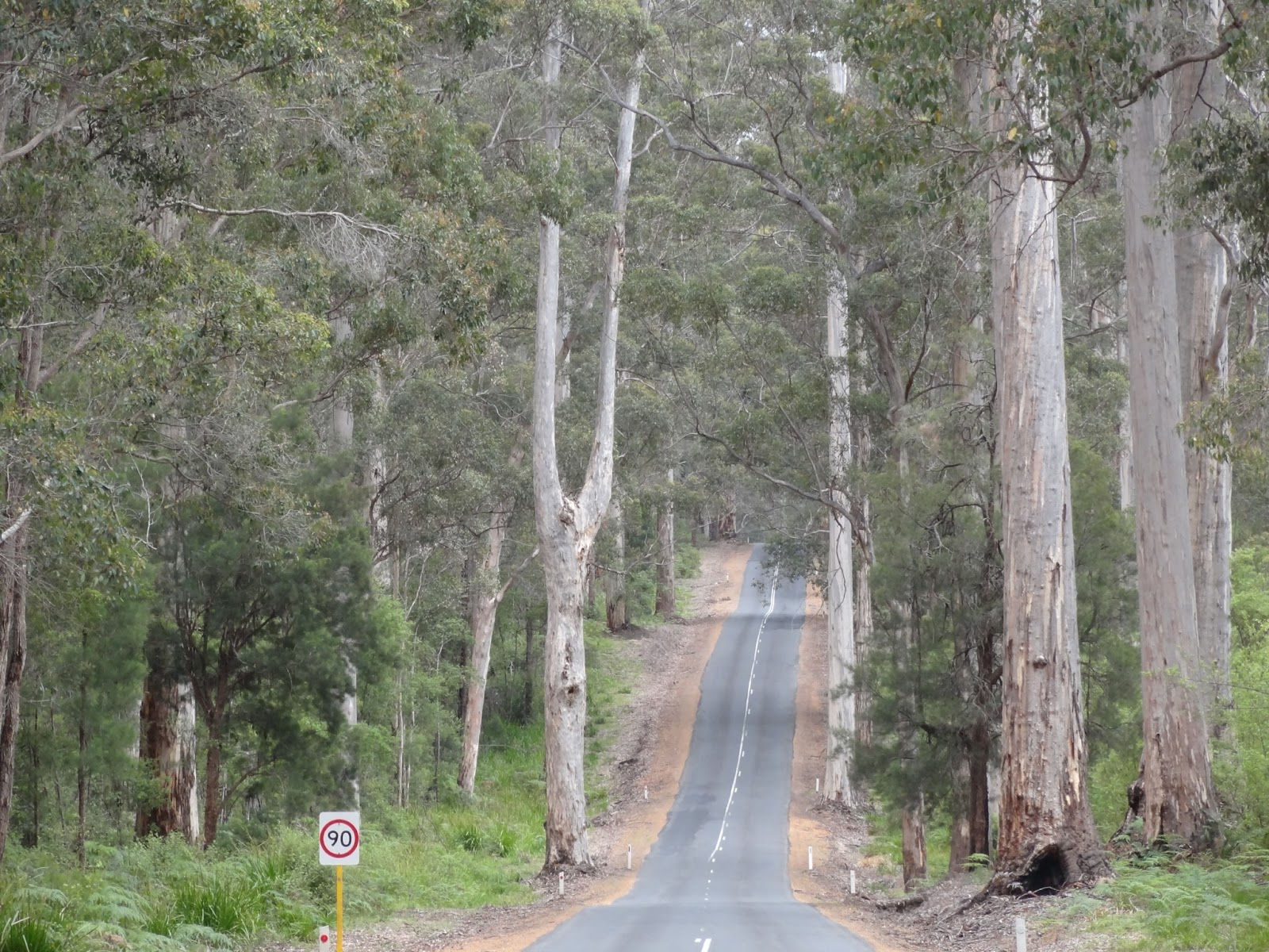 We are in forrest country now. Most of the day the roads were like this