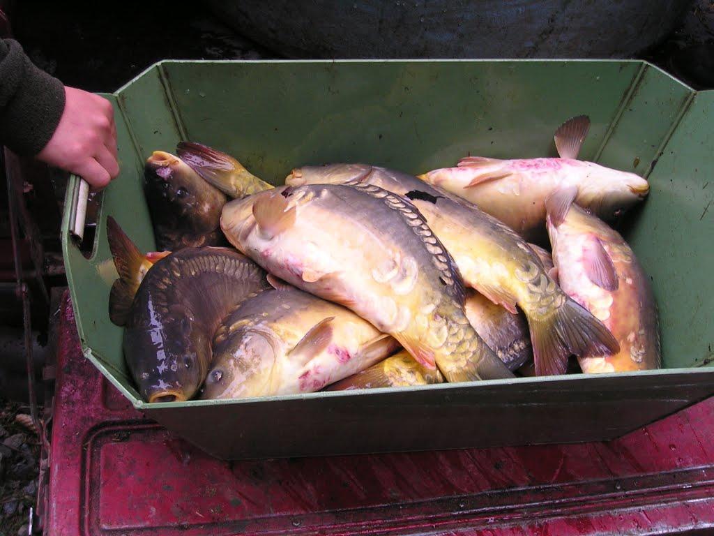Rybářské sdružení Chobot - CHO...