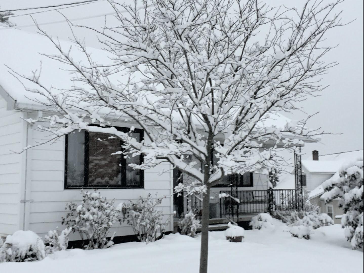 Jan 18 2020 snowy view