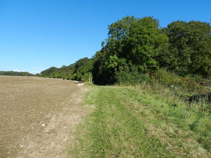 One of Many Woods on the Indigo Section