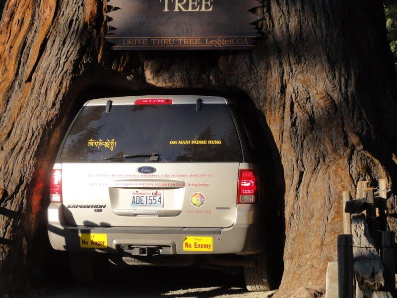 Rinpoche's car going through Chandelier tree in Leggett