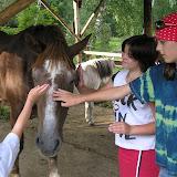 Návštěva na farmě (2)
