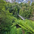 A suspension bridge in the Jurassic Park