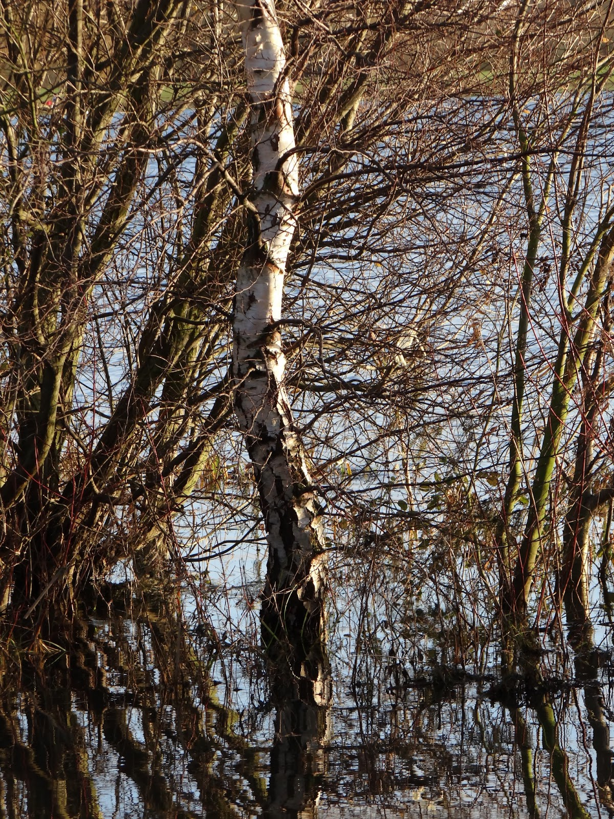 Reflected Trunk