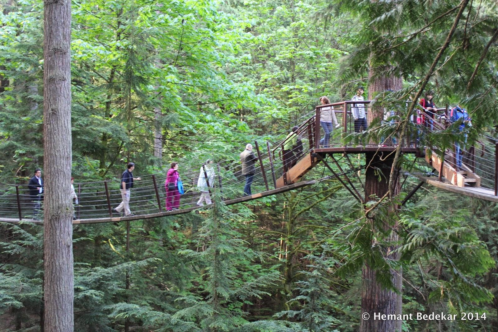 Capilano Suspension Bridge Treetops Adventure