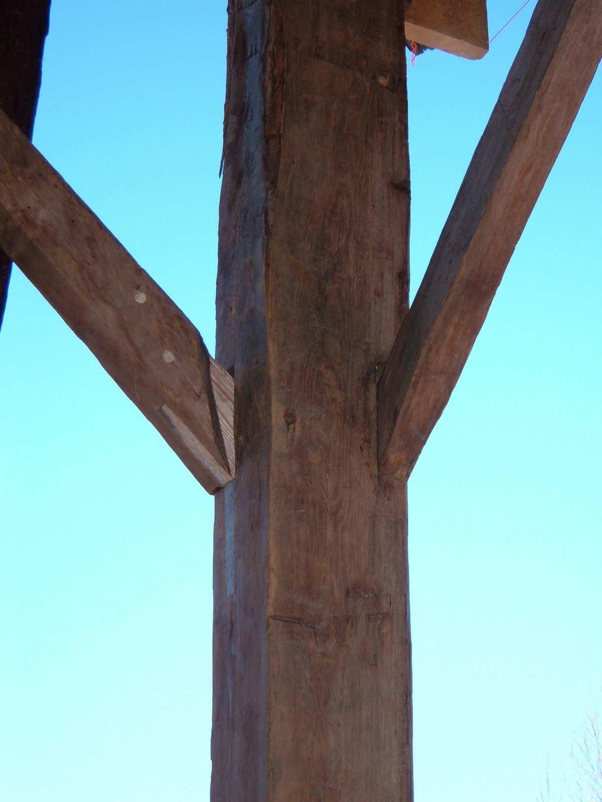 The hewn braces in this scribe ruled barn were mostly oak.  Shown here is a brace repaired with an oak free tenon.