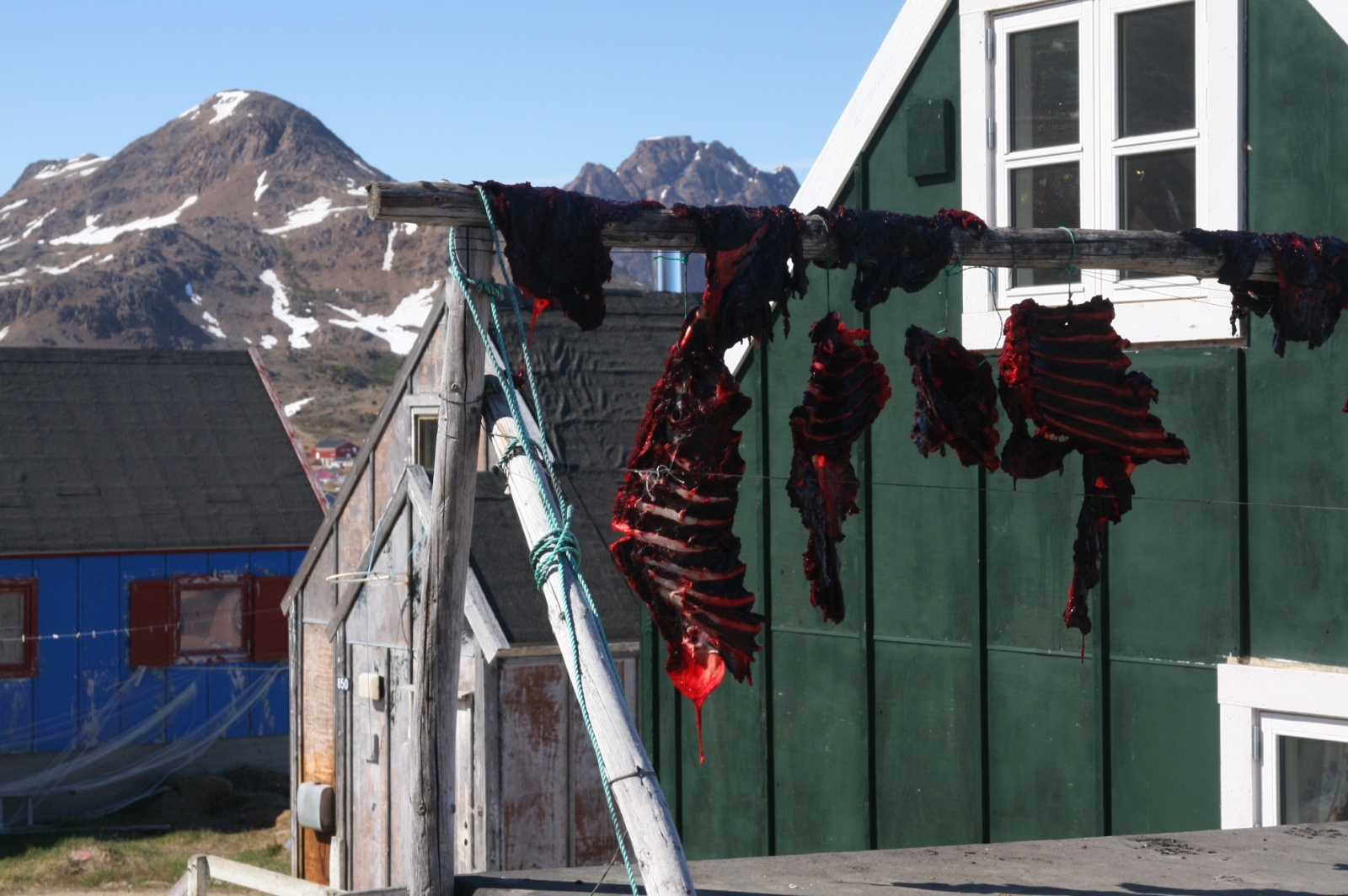Raw seal meat is drying in the sun