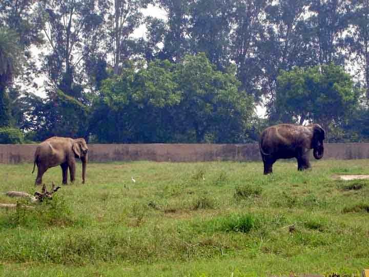 elephants at Chattbir zoo Chandigarh