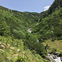 Valea Paltinului