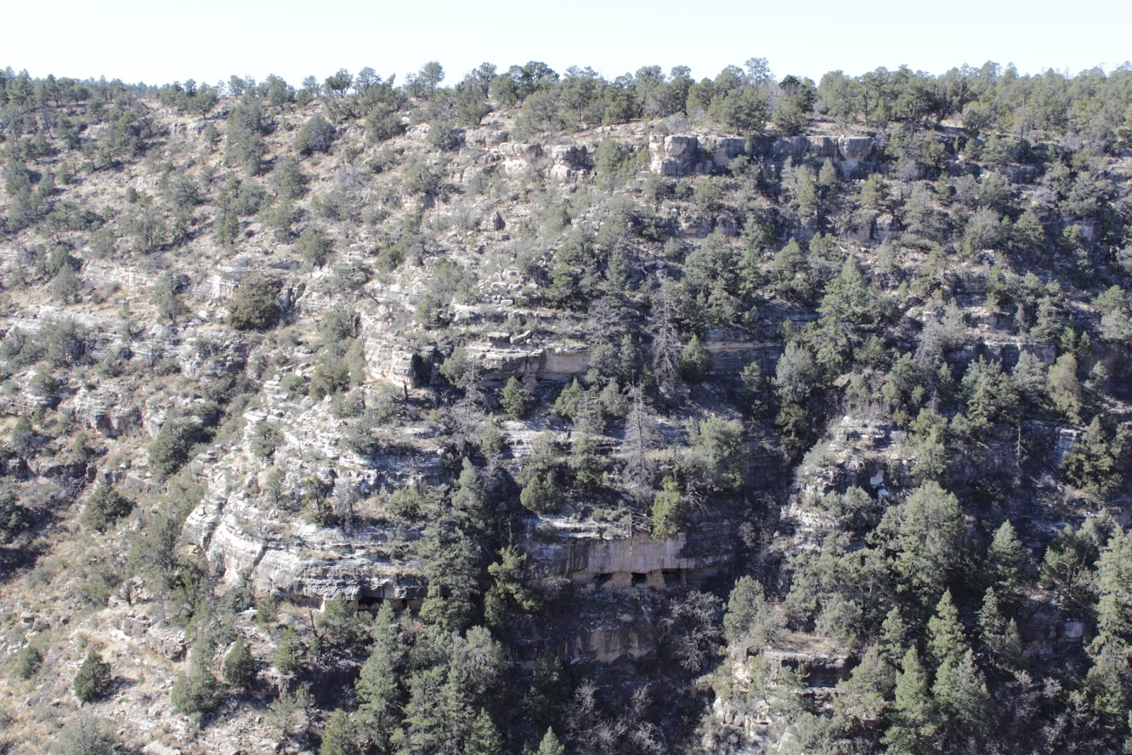 The Sinagua Indians inhabited the cliff dwellings. The Sinagua built their homes under limestone ledges, deep within the canyon, some time between 1125 and 1250 AD. They left mysteriously around the year 1250 for reasons that are still unknown.