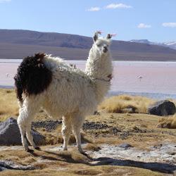 2005 - Pérou - Bolivie