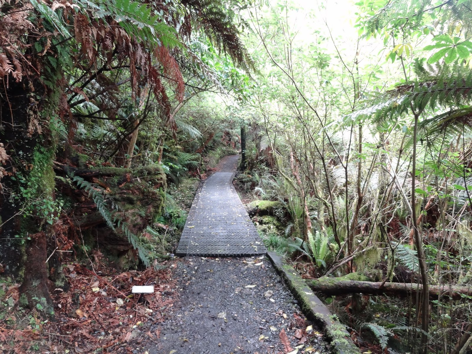 McCleans Falls walk