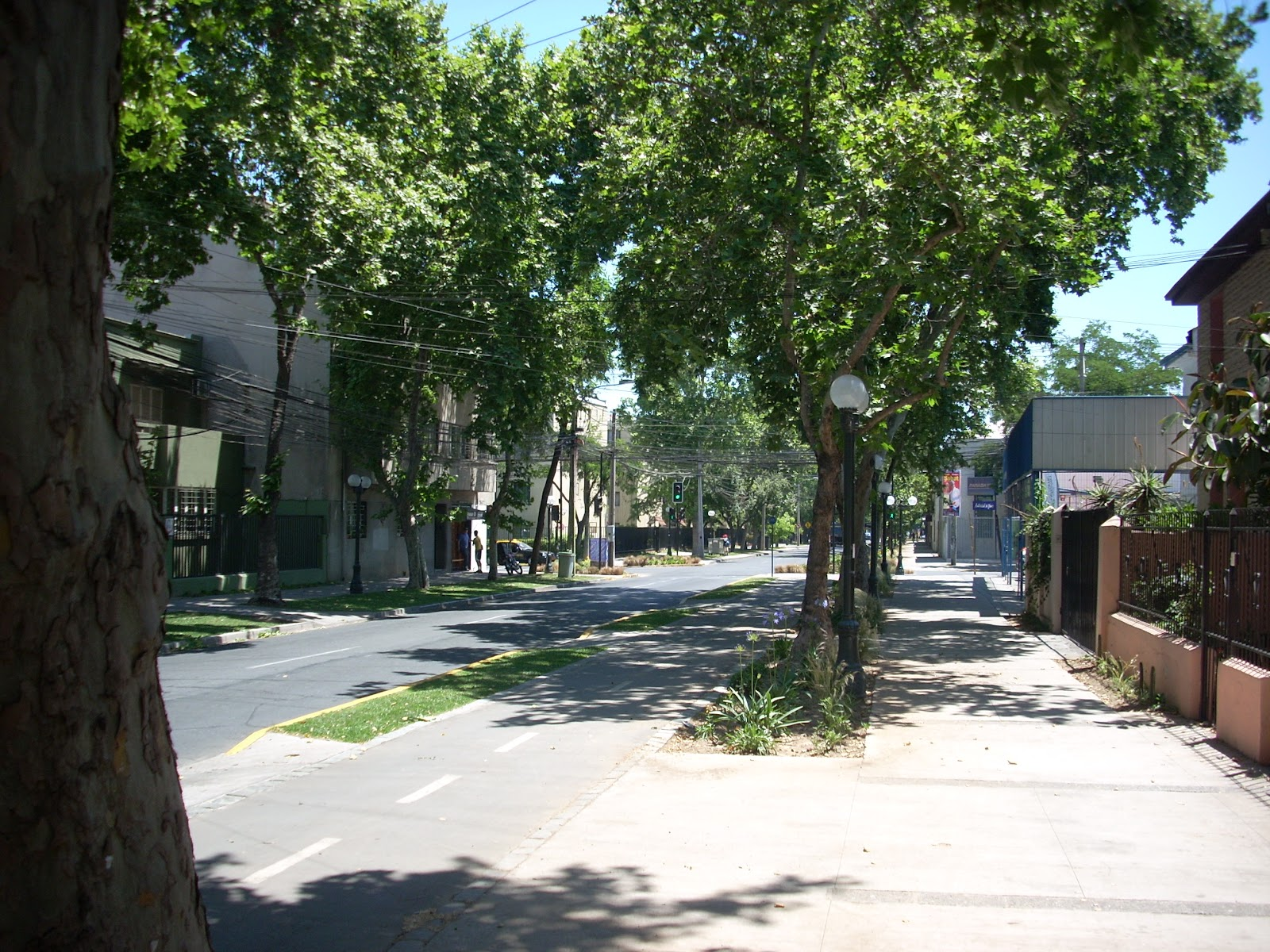 Nice streets too - notice the bike path between the trees and road?