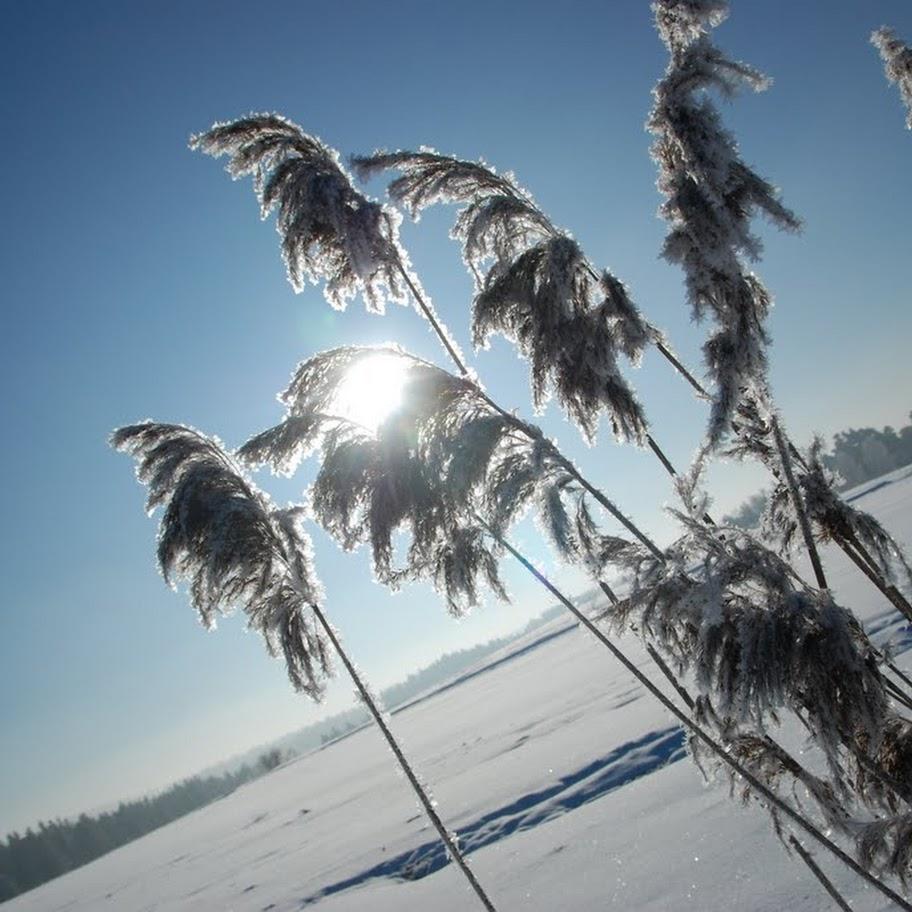 Ladovská zima 2010 - DSC_1620