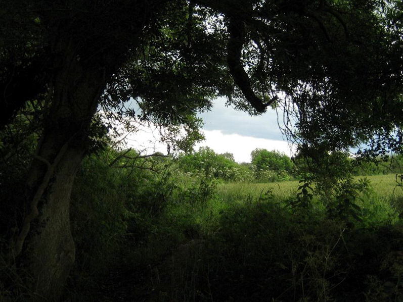 Trees and Fields