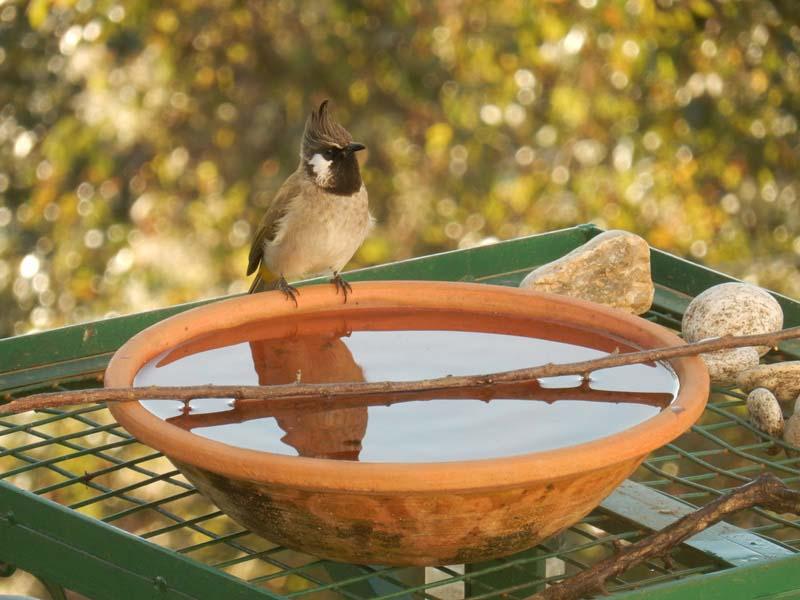 Birds at Sunrise Villa Shimla