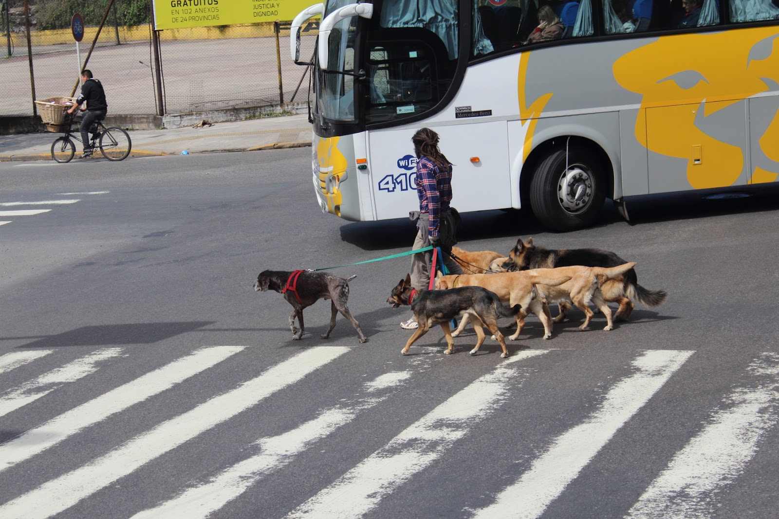 The famous Buenos Aires dog-walkers