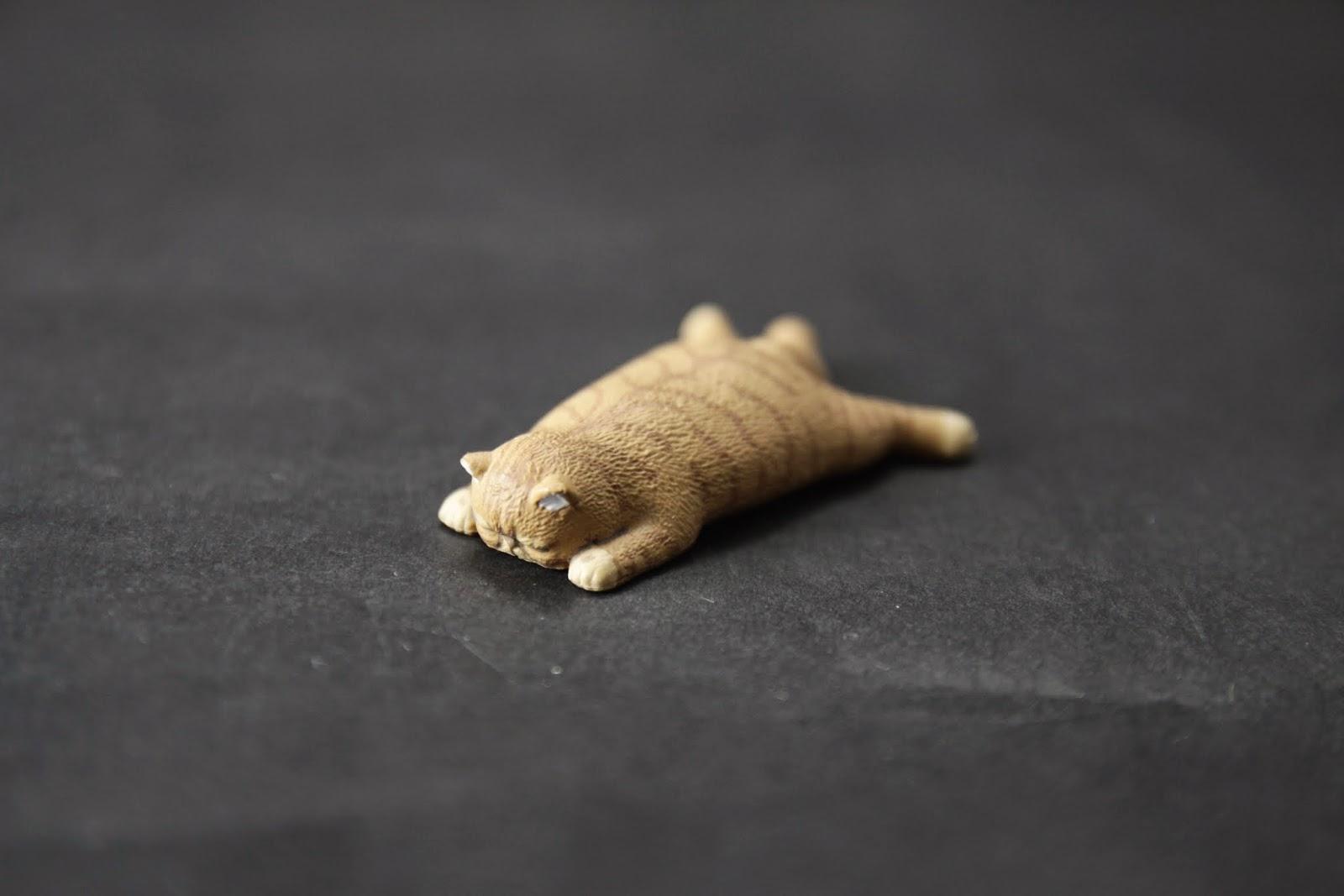 不同的貓種, 應該是波斯之類的貓~