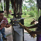 Squeezing sugar cane juice