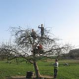 Strom v obležení