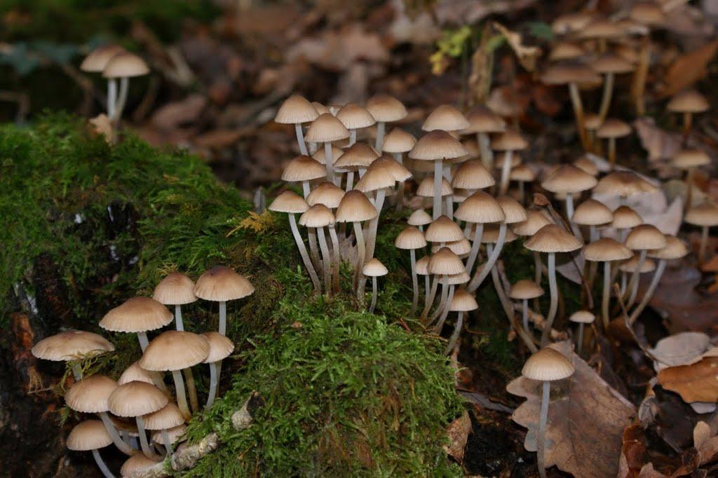 Les champignons...