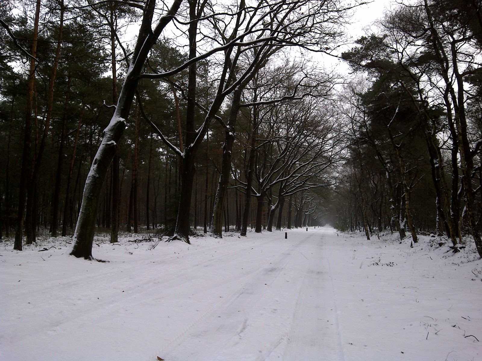 Lose the Xmas kilos (and flee from in-laws) in a 15km run across snowy #Holterberg