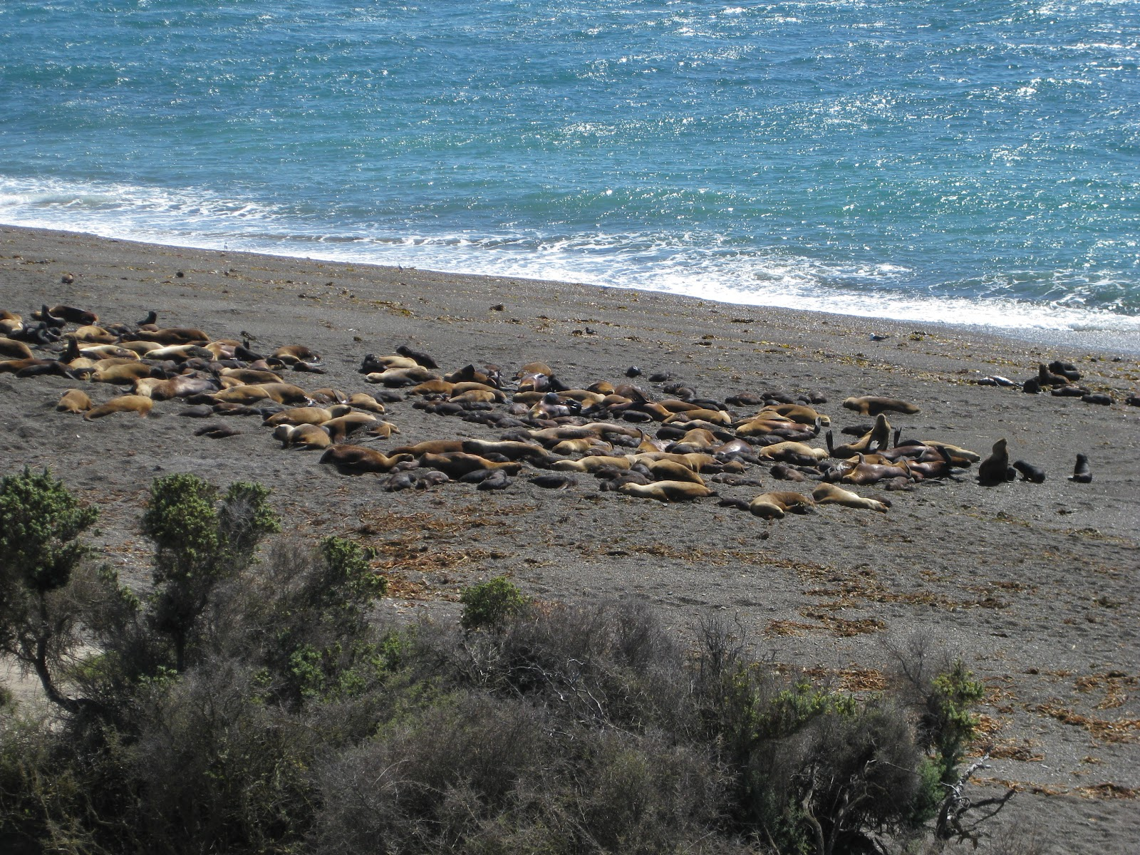 Closer view of sea lions. Unfortunately I don't have the fancy SLR camera and lenses