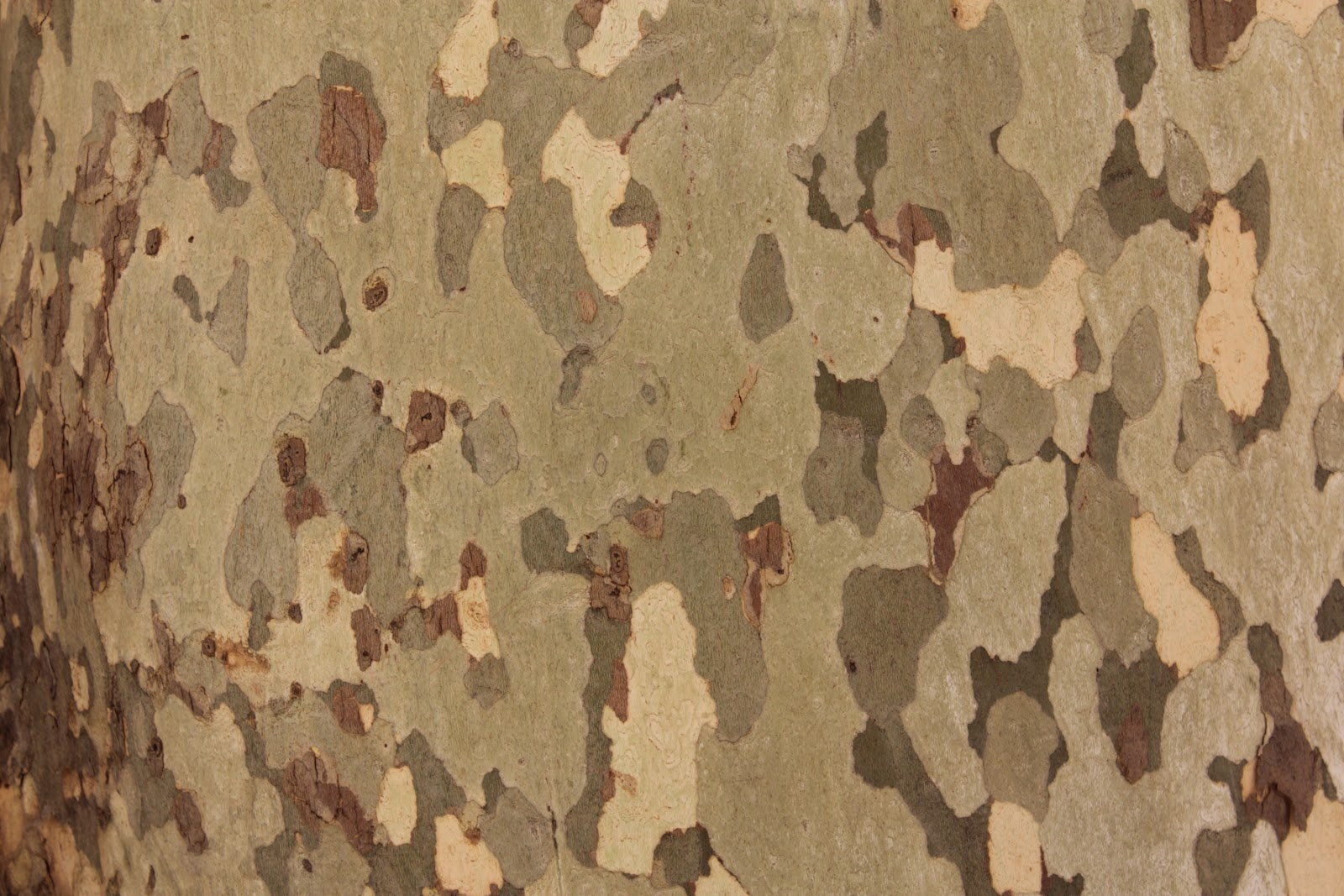 Cool Camouflage pattern on a tree bark