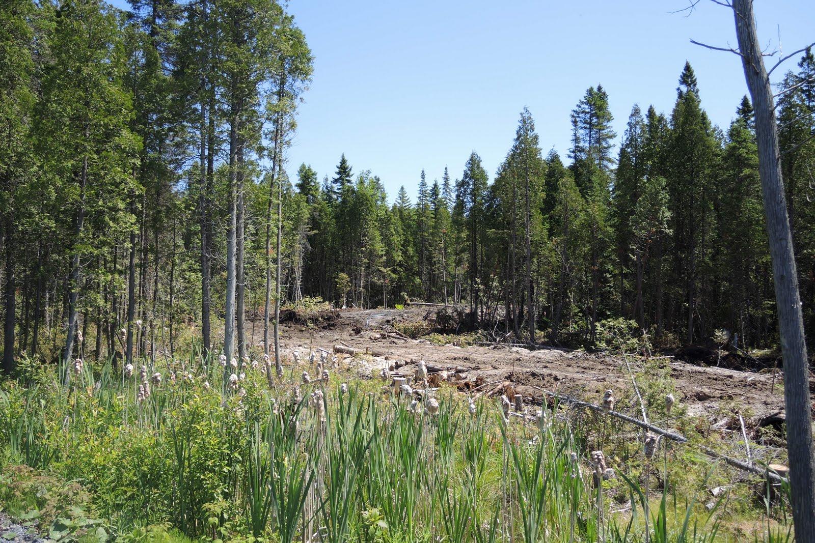 Route d'une exploitation forestière