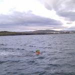 Swim from Viðey directly to shore