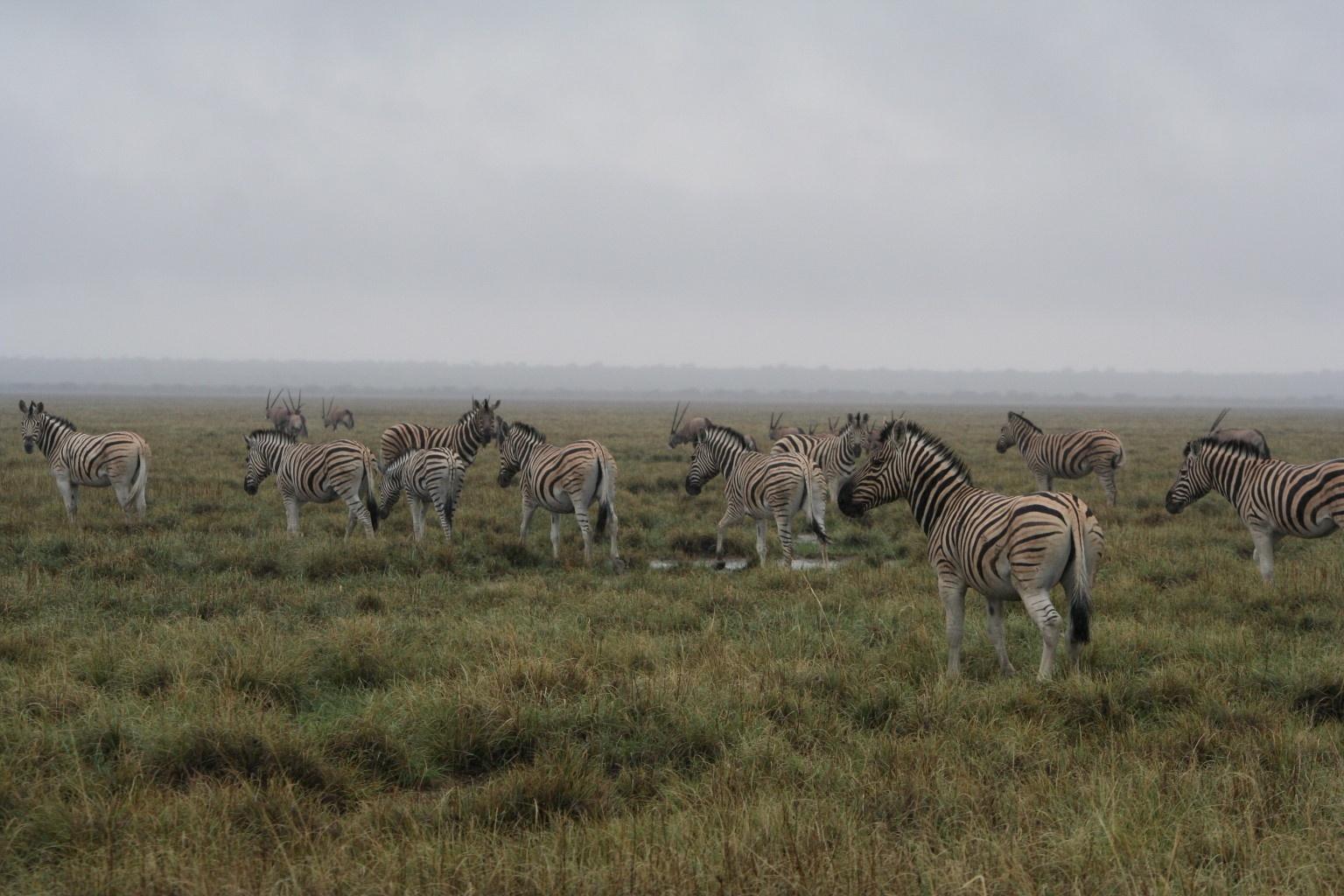Rainy savannah