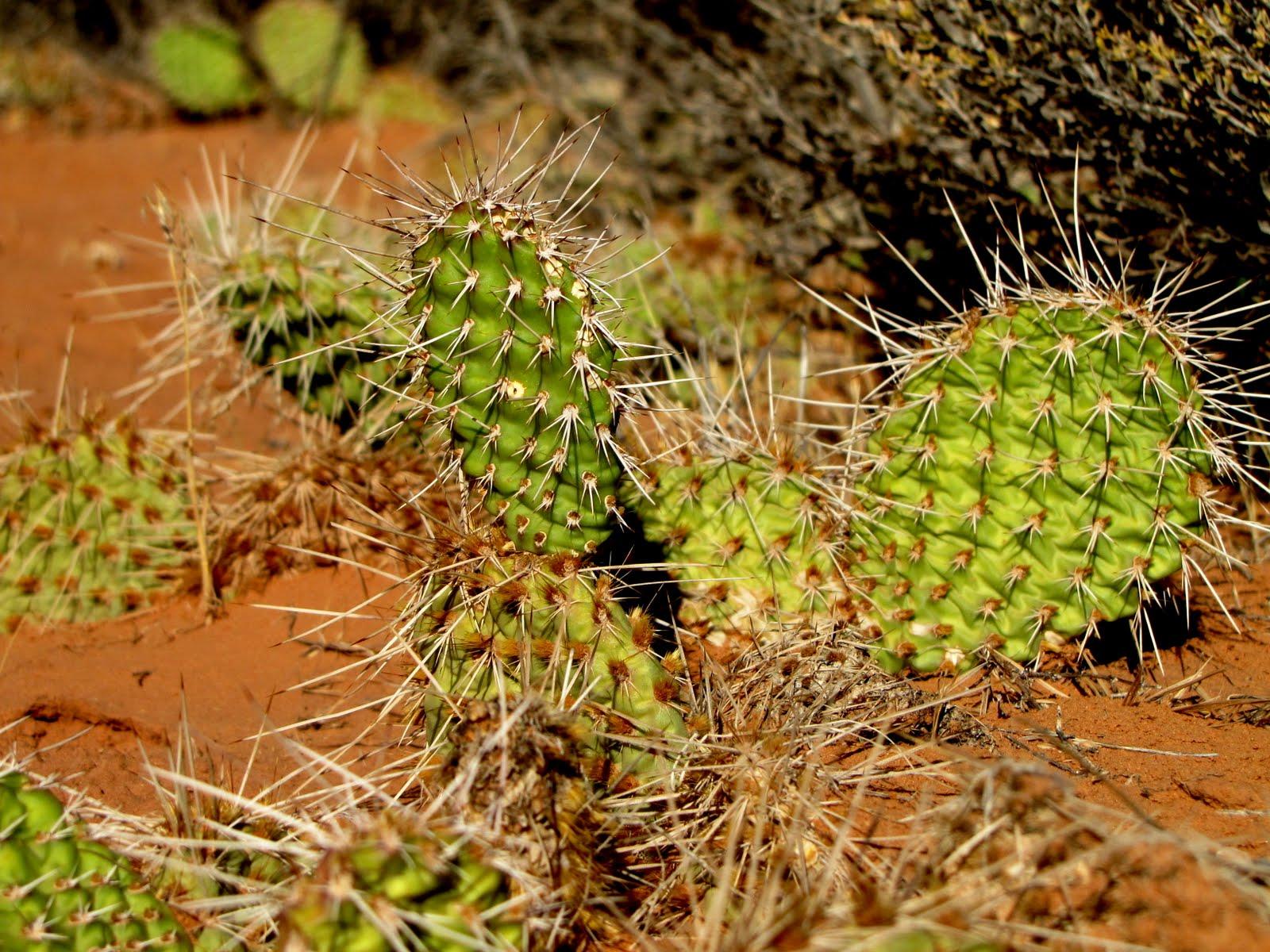 Hard Life in the Desert