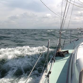 Nic31 Bruinvis voor de Zeeuwse kunst