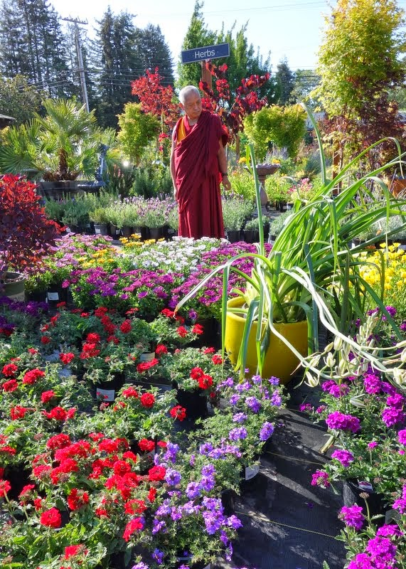 Lama Zopa Rinpoche shopping for flower offerings, Aptos, California, May 2014. Photo by Ven. Roger Kunsang.
