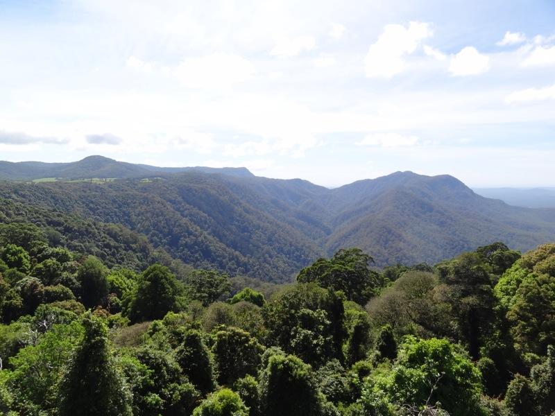 The view from the Skywalk, Dorrigo National Park
