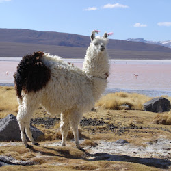2005 - Pérou - Bolivie