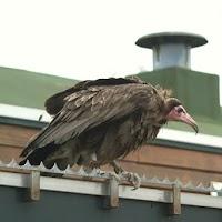 Opening Speeltuin en Roofvogelshow 17 maart 2007 - Nr_159