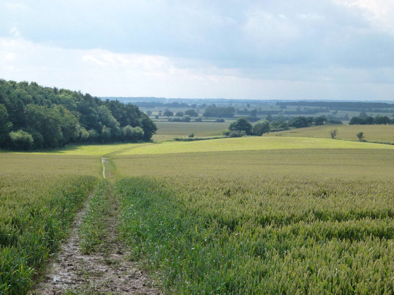 Towards Oakhill Wood