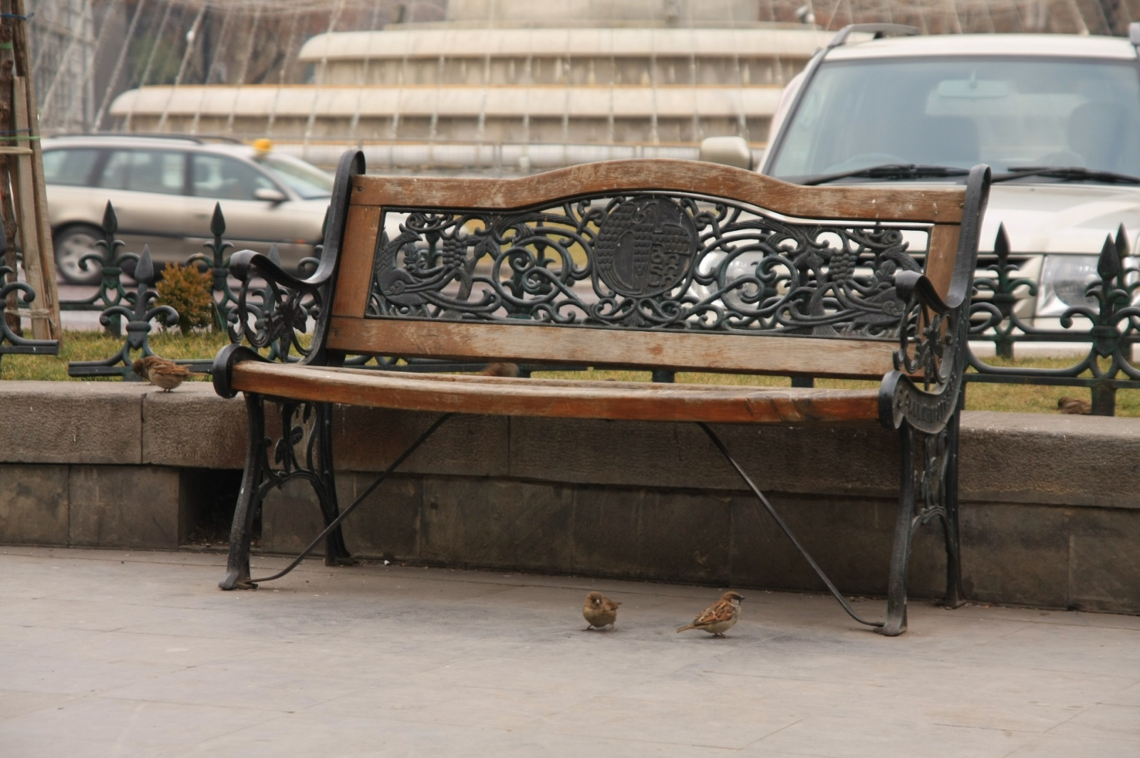 Sparrows are the same everywhere in the world