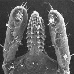 İlginç Mikroskop Görü...